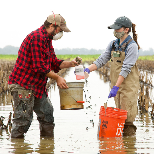 Biologist calling samples in the Delta fields